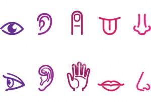 stock-illustration-5622861-five-senses-icons